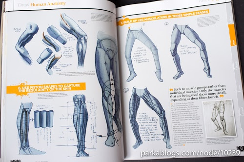 how-to-draw-and-paint-anatomy-7.jpg