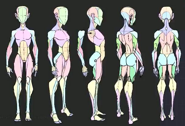 Disney Stylized Anatomy.jpg